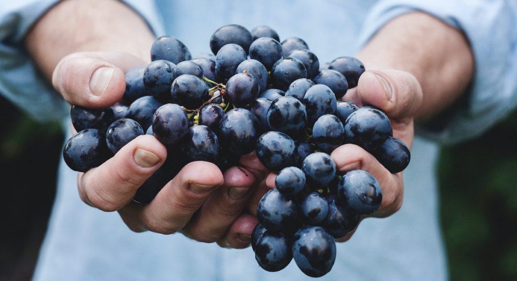 Bordeaux-Kompass für Rotweine: Rotweintrauben